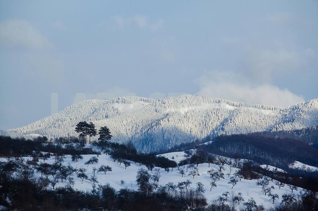 Transcarpathian Mountains — Image 50123