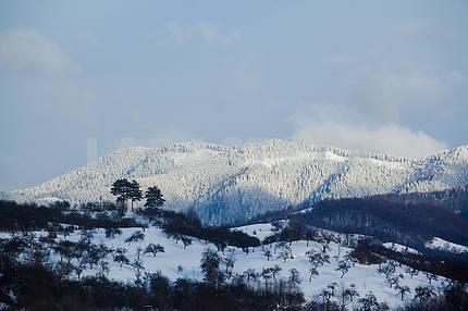 Transcarpathian Mountains