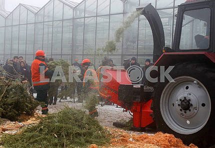 Disposal of Christmas trees
