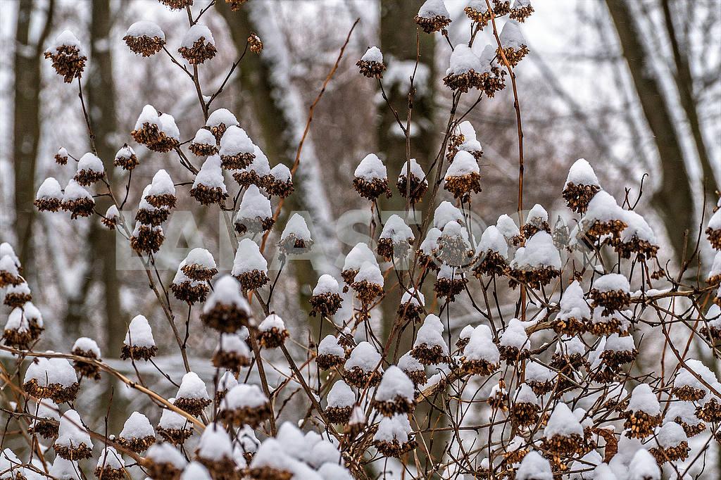 Зима в парке Пуща Водица — Изображение 50394