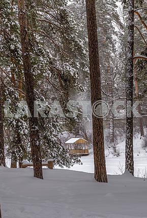 Winter in the park Pusha Voditsa