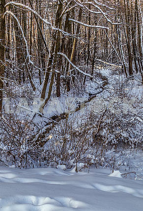 Зима в парке Пуща Водица