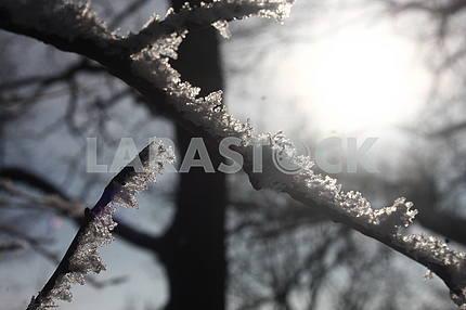 Winter in Poltava dendrological park
