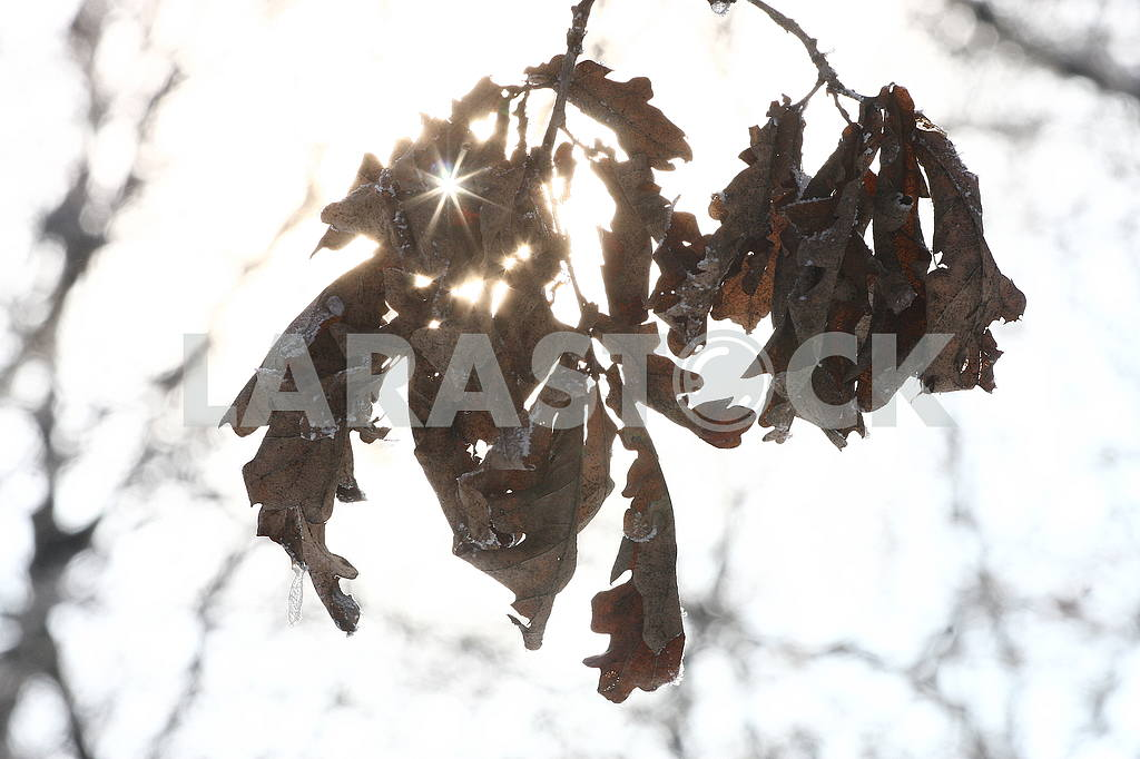 Winter in Poltava dendrological park — Image 50421