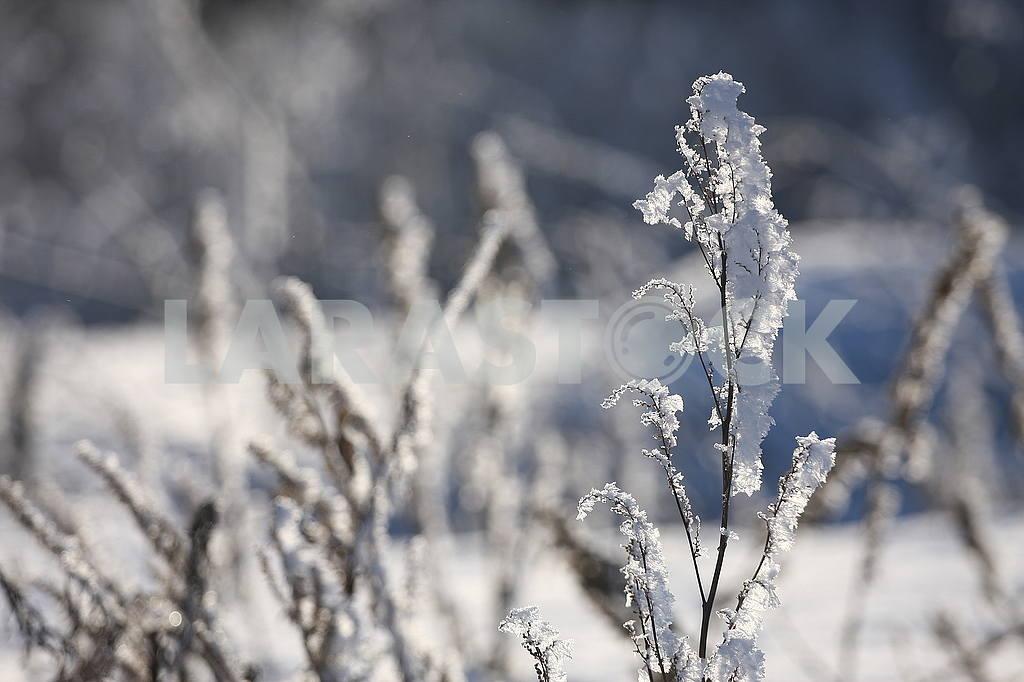 Winter in Poltava dendrological park — Image 50429