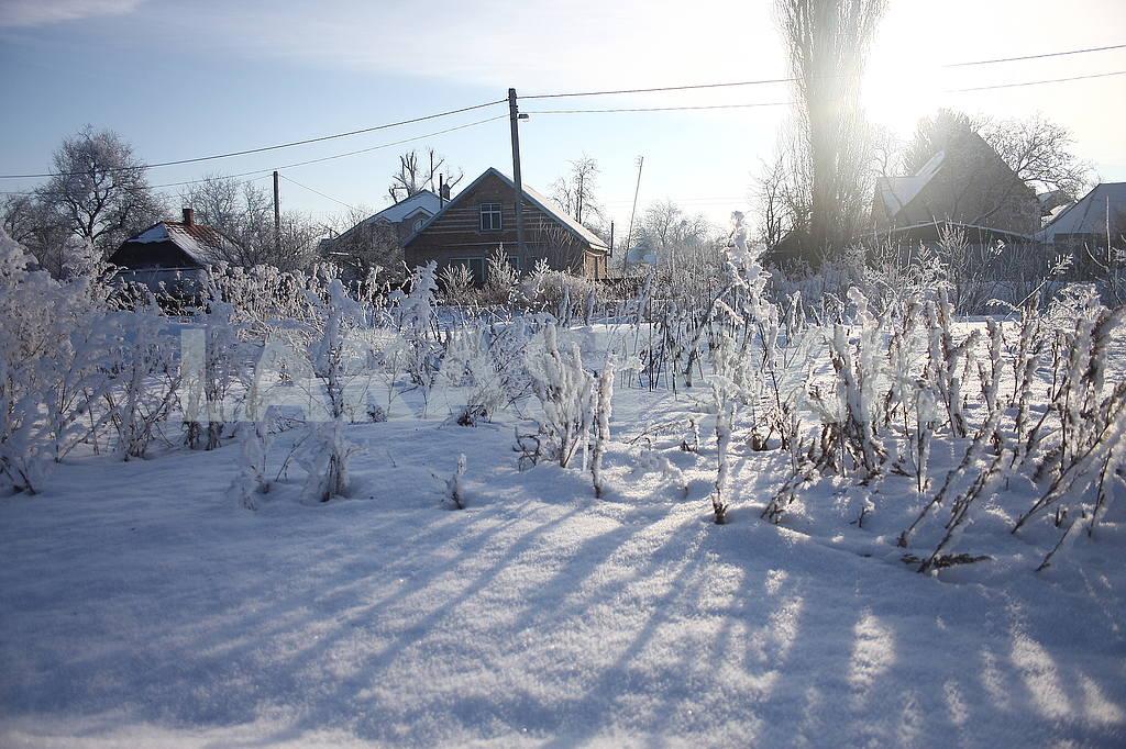 Winter in Poltava dendrological park — Image 50431
