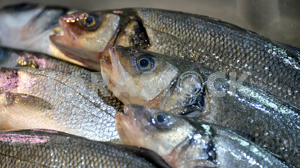 Sea trout on the counter of the store — Image 50690