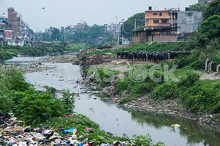 On the banks of the Bagmati river dead piles of garbage