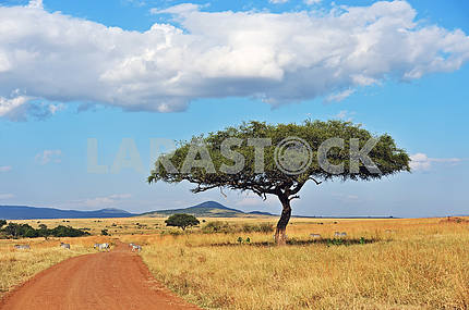 Tree Masai Mara