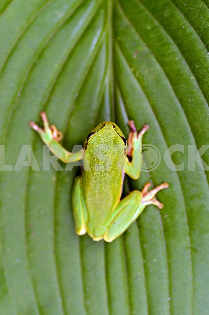 Frog — Image 50975