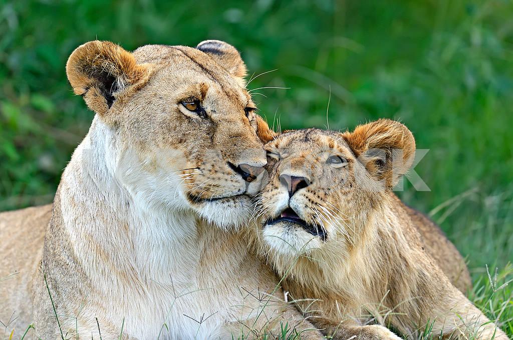 Masai Mara — Image 51046
