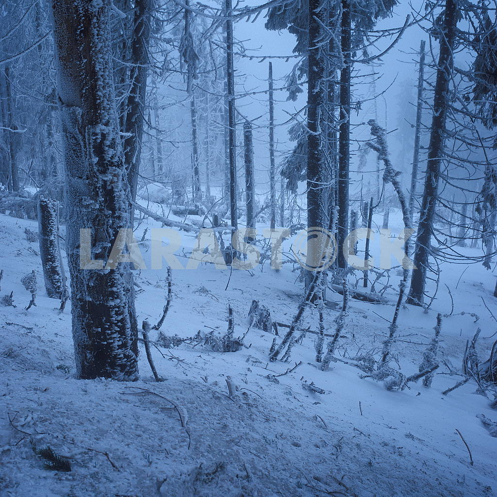 Forest in the snow — Image 51325