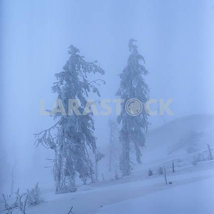 Smereki in the fog