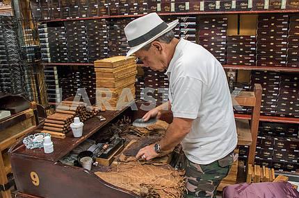 Folding cigars in tobacco store. Little Havana. Miami
