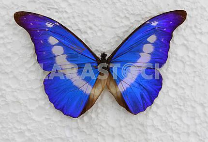 Бабочка на стене