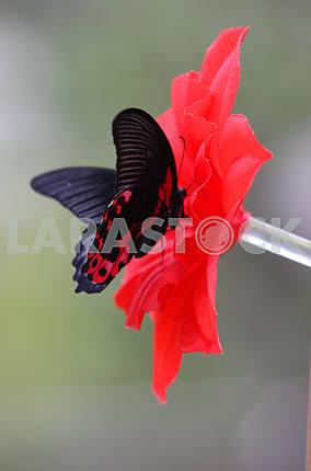 Бабочка в оранжерее