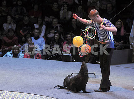 An animal trainer with a sea lion