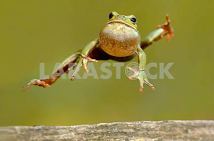 Frog karate