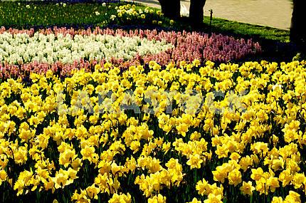 Клумба гиацинтов, цветы, весна, дендропарк