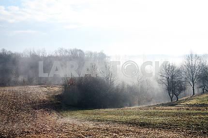 Туманное сельское утро 9 февраля