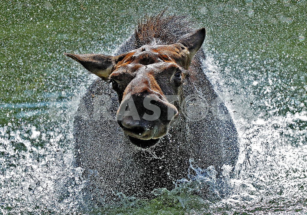 Elk floats — Image 52186