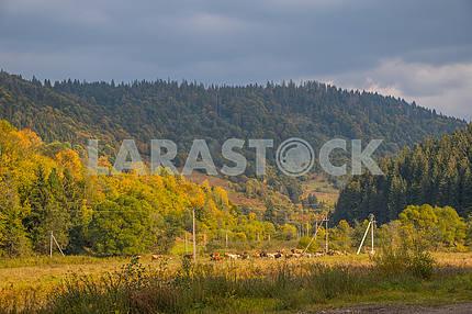 Горы Карпат. Украина