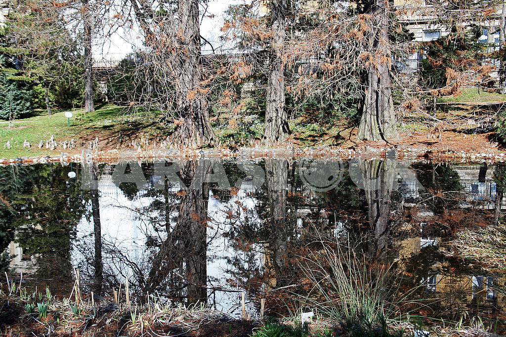 Springtime in Zagreb Botanical Garden,Croatia,swamp,11 — Image 52608