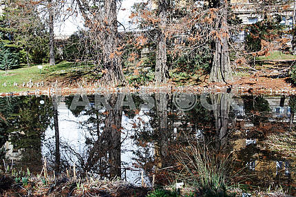 Весна в ботаническом саду Загреба, Хорватия, болото, 11
