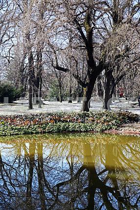 Весна в ботаническом саду Загреба, Хорватия, болото, 13