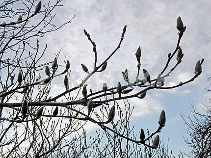 Springtime is coming,early messengers,Croatia,4