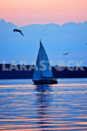 Yacht at sunset, sun sail, sea gulls, sea