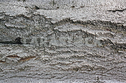 The bark of a tree close up
