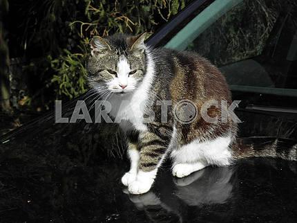 Pet cat enyoing first springtime sunlight,Croatia