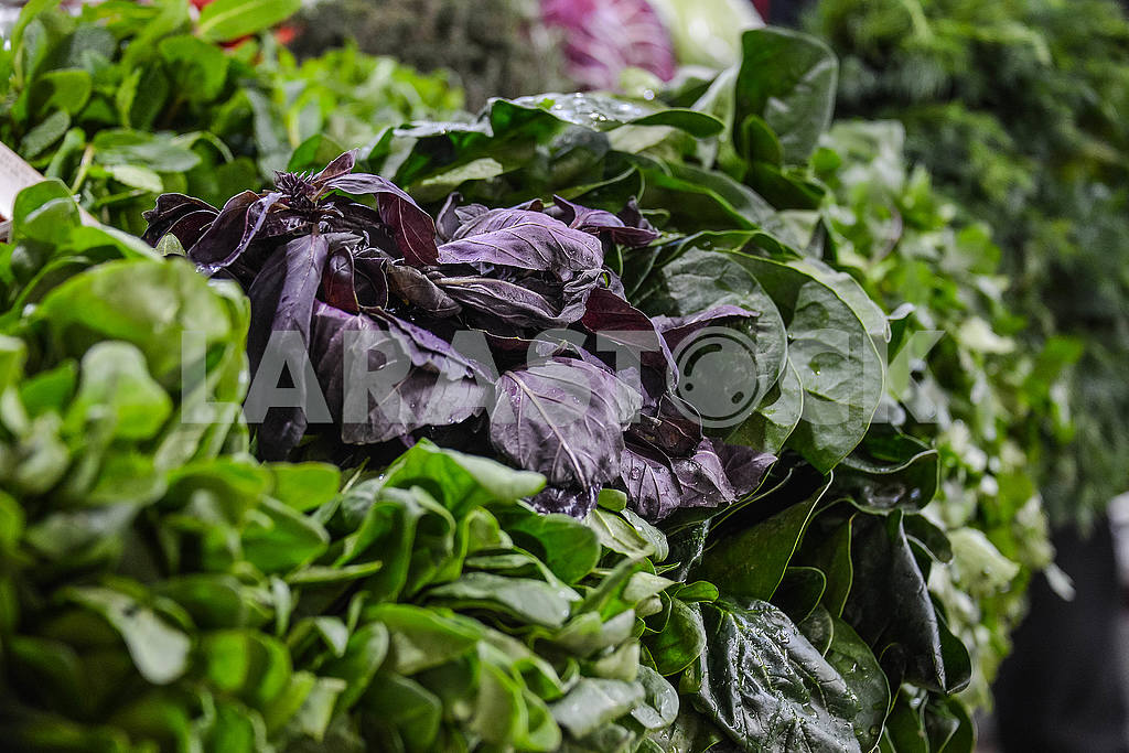 Basil in a pile of greens on the counter — Image 53048