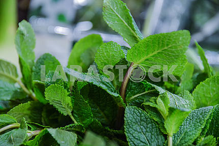 Mint sprigs on the market counter