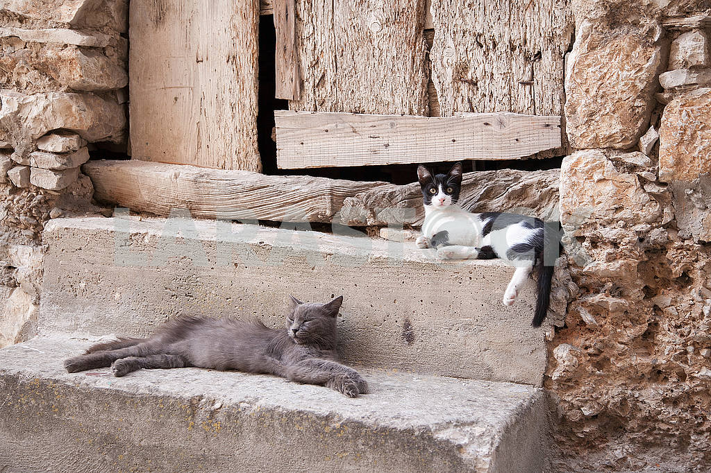 Two cats on a stone — Image 53208