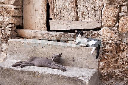 Две кошки на камне