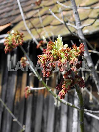 Springtime's awaking in the countryside,wild tree,Croatia,11