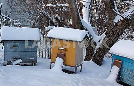 Три улья зимой