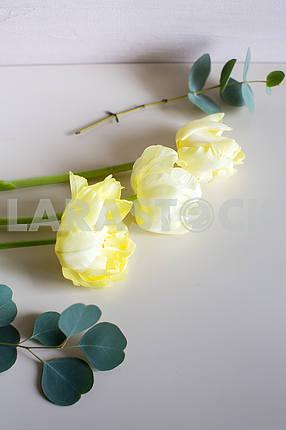 Three white tulips on white