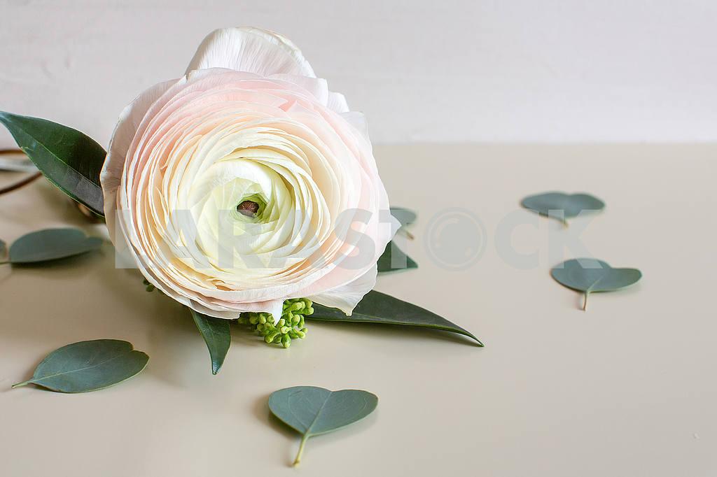 Ranunculus flower — Image 53288