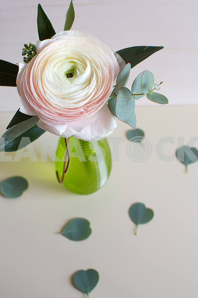 Ranunculus flower — Image 53289