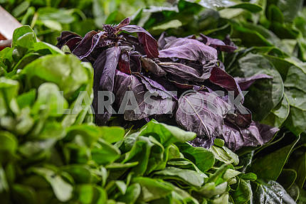 Bunch of basil next to sorrel on a counter.