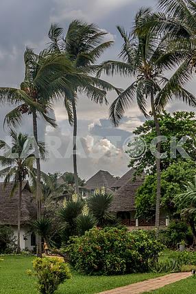 Пальмы на Занзибаре