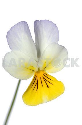 Лесной цветок