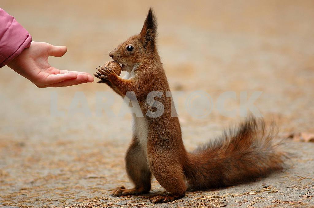 To take a nut — Image 53662
