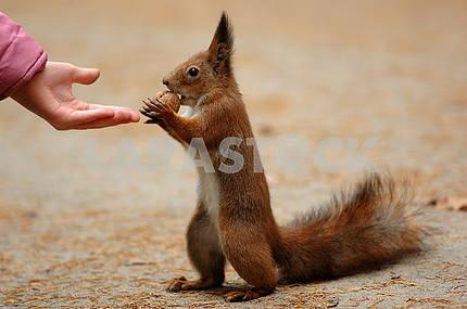 To take a nut