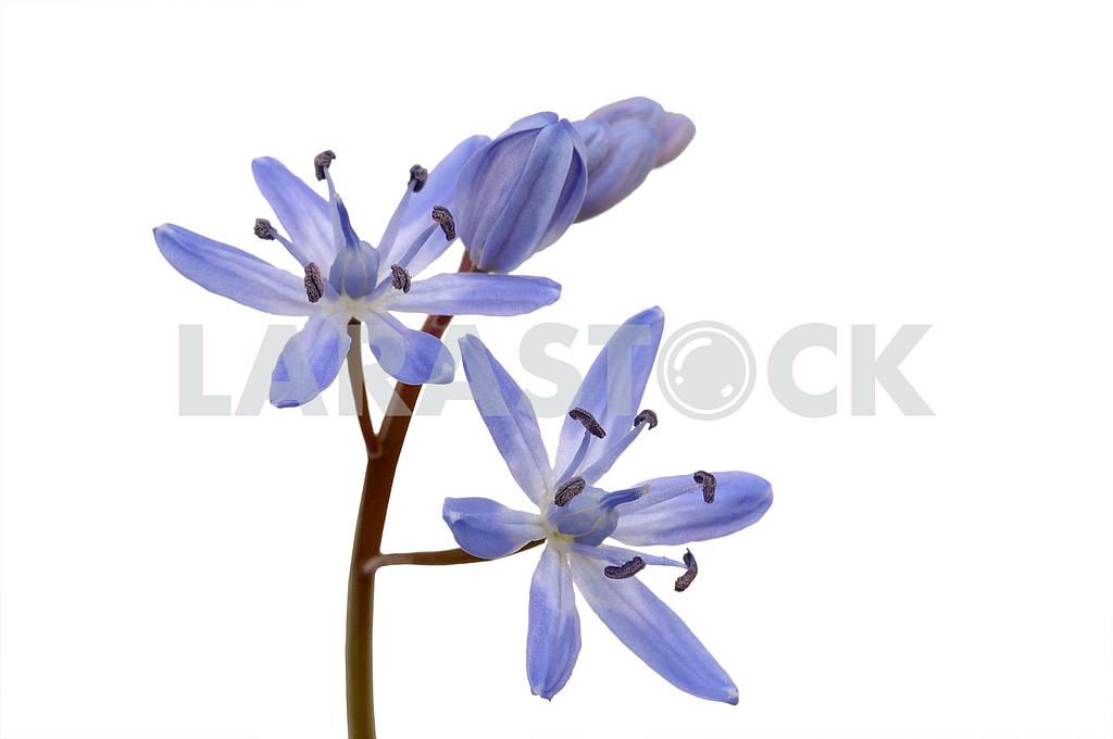 Forest spring flower — Image 53678