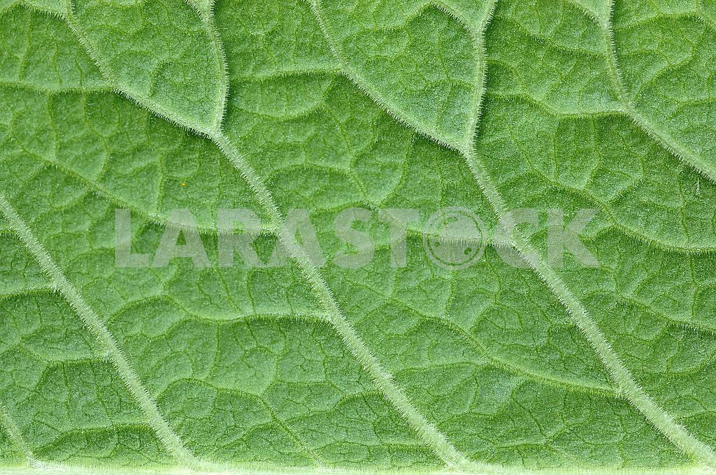 Green leaf — Image 53799