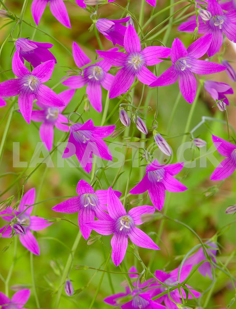 Flower background — Image 53810